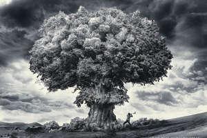 Greenpeace 'Bomb' Campaign