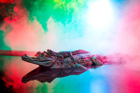 Neon Crocodile Photographs - The 'Caiman Crocodilus' Series Captures Unique Images of Reptiles