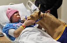 Adorable Therapeutic Horses - These Miniature Horses Help Victims of Traumatic Events