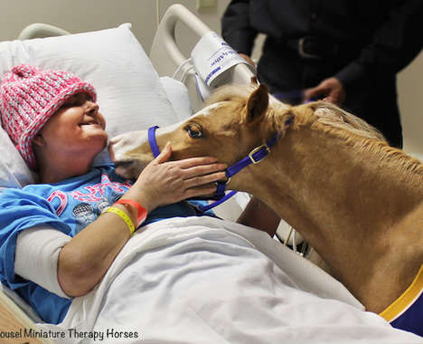 Adorable Therapeutic Horses