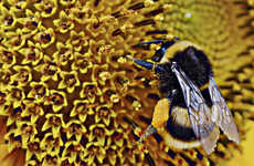 Bee Vectoring Technology Offers an Organic Solution to Pesticides