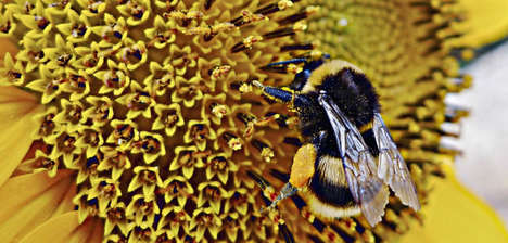 Bee-Delivered Biocontrols - Bee Vectoring Technology Offers an Organic Solution to Pesticides