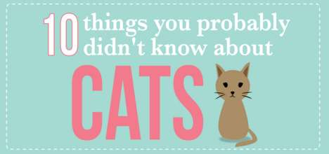 Illustrated Feline Facts - This Illustrated Cat Infographic Contains 10 Interesting Pieces of Trivia