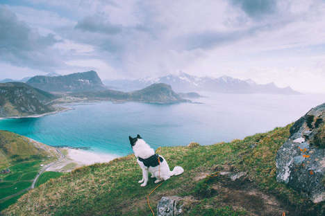 Canine Explorer Photography - Henrik Vikse Makes his Husky the Star of His Adventure Photography
