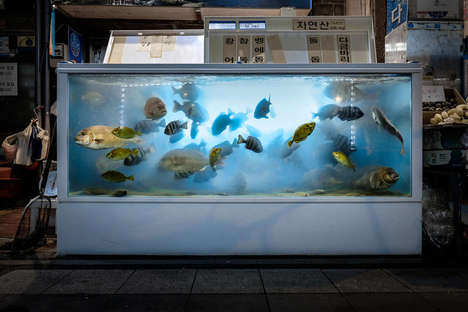 Fish Tank Photography - This Photo Series Captures Fish as They Wait to Become Seafood