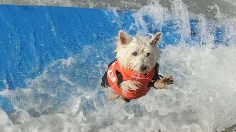 Dog Surfing Photographs - This Surf Dog Contest Includes Costumes and a Red Carpet