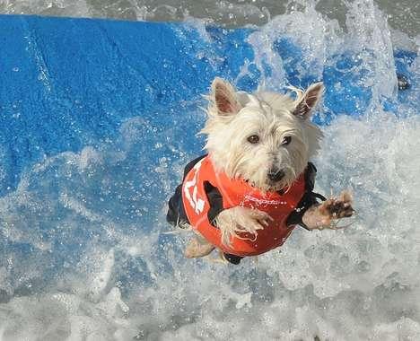 Dog Surfing Photographs