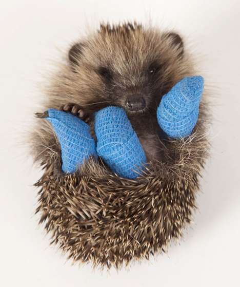 Hedgehog-Saving Initiatives - This Company Launched a Campaign to Support the British Hedgehog