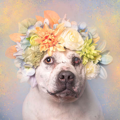 Floral Pit Bull Photography - The 'Pit Bull Flower Power' Photo Series Depicts Homeless Pit Bulls