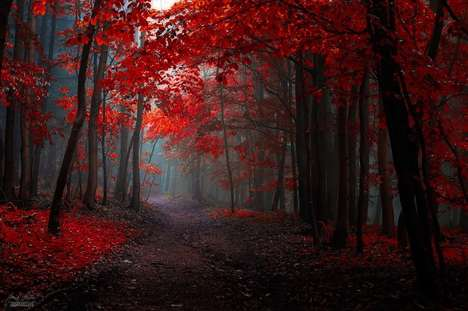Vivid Autumn Photography - This Photographer Captures Dreamlike Pictures of Forests in Fall