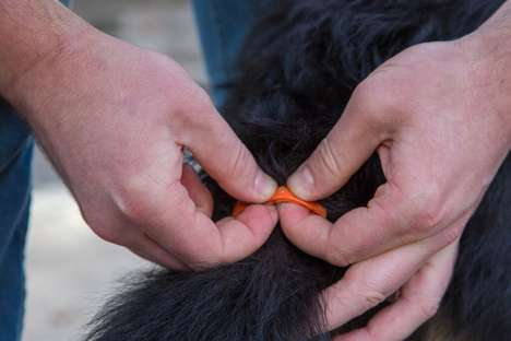 Canine Emotion-Sensing Wearables - The DogStar TailTalk Translates Tail-Wagging Into Emotions