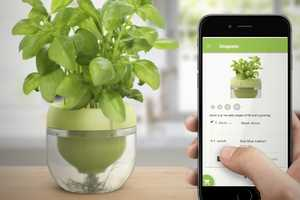 This Pot and Plant App System Makes It Easy to Grow Food Without a Yard