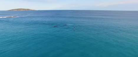 Viral Whale Videos - This Heartwarming Video Was Made With Drone Footage