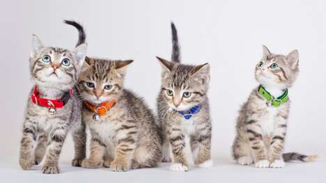 Canadian Campaign Kitties - These Rescued Kittens are Named After Canadian Political Party Leaders