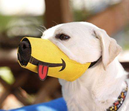 Funny Face Dog Muzzles - This Muzzle Makes Canines Look Like Silly Cartoon Smiley Faces