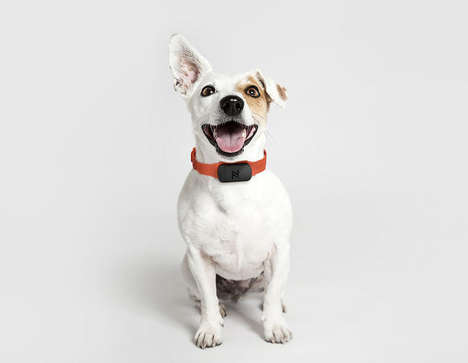Dog Tag Pet Insurance - 'Nuzzle' is a Smart Pet Collar Tag That Encourages Owners to Buy Insurance