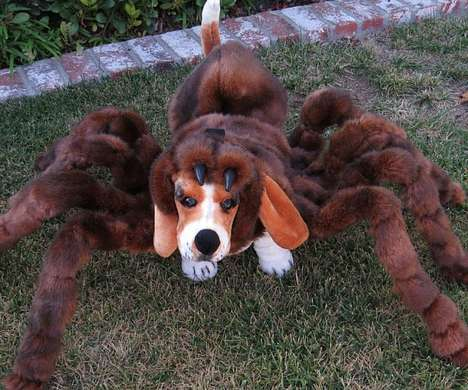 Spider Dog Costumes - This Pet Costume Transforms Your Dog into a Gigantic Tarantula