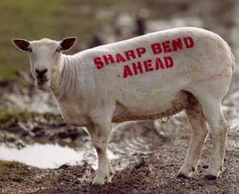 Livestock Road Signs