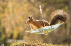 Whimsical Squirrel Photographs