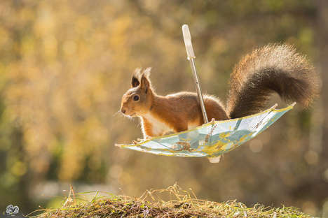 Whimsical Squirrel Photographs - This Photographer Takes Pictures of Squirrels in His Backyard
