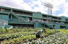 'Fenway Farms' is Built on the Roof of Boston's Historic Fenway Park