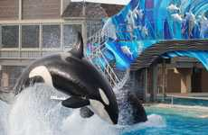 SeaWorld is Replacing the Shamu Show with a Display of Natural Behavior