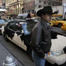 Horny Taxis - Advertising for Bull Riders