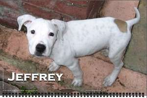2009 'Adopt a Shelter Dog Calendar'