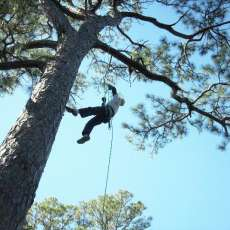Recreational Tree Climbing