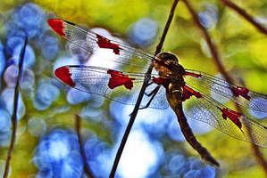 Beautiful Dragonfly Closeups