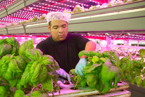 Large-Scale Vertical Farms - This Company Aims to Make Local Produce More Accessible for Consumers
