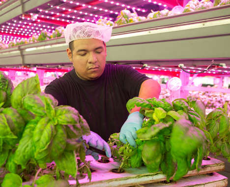 Large-Scale Vertical Farms