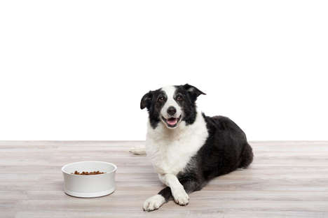 Weight-Tracking Pet Bowls - This Smart Food Bowl Helps Dogs Lose Unwanted Weight