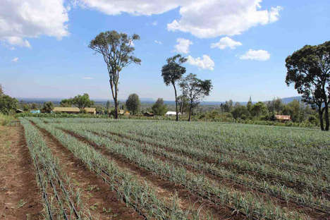 Solar-Powered Irrigation Systems - This Technology Helps Farmers Increase Crop Yields in Dry Places