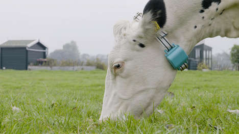 Livestock Movement Trackers - This Device Helps Farmers Track and Monitor Livestock