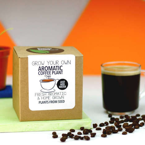 Homegrown Coffee Kits - This Kit Allows You to Grow Your Own Coffee at the Comfort of Your Own Home