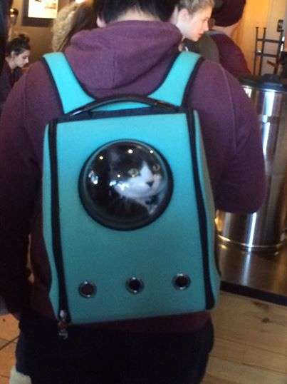Spaceship-Like Cat Carriers - The U-Pet Carrier Has Portholes So Cats Can See the Outside World