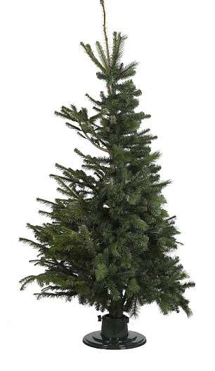 Hybrid Christmas Trees - This Standing Christmas Tree from B&Q is Half Fir and Half Fake