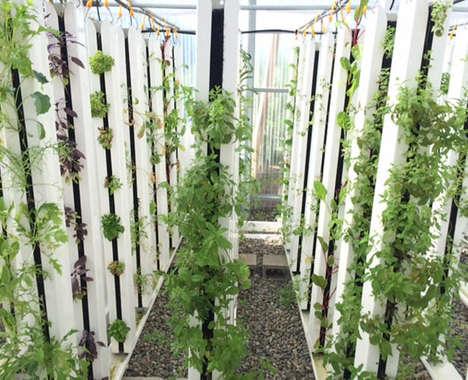 Sustainable Aquaponic Urban Gardens