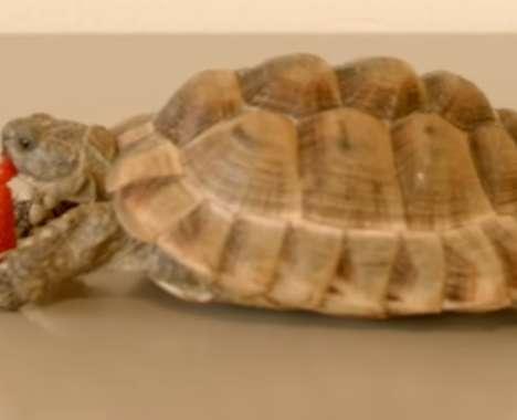 Charitable Tortoise Commercials