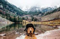 Travelling Pet Photo Essays