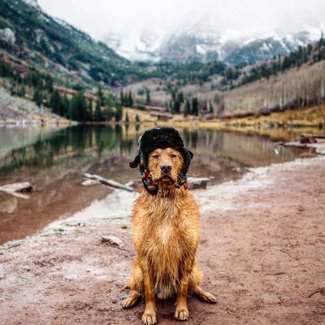 Travelling Pet Photo Essays - Hunter Lawrence's Golden Retriever Stars in This Adorable Series