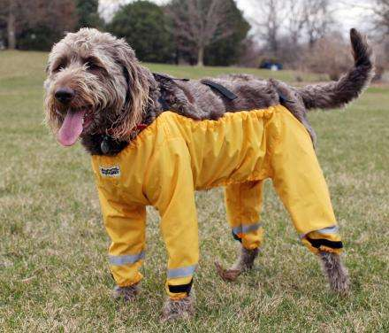 Protective Pooch Pants - Muddy Mutts Dog Pants Keep the Lower Portion of Pooches Pristinely Clean