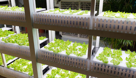 Robot-Run Farms - This Japanese Robot Farm is Monitored By Autonomous Systems