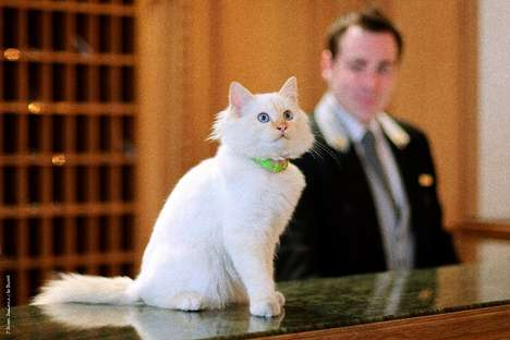 Luxury Hotel Resident Cats - Le Bristol Paris Has Two Birman Kitties Watching Over the Lobby