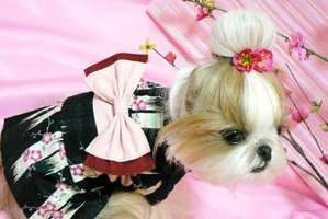 Canines Dressed In Traditional Japanese Silk Robes