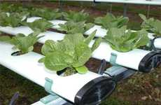 DIY Home Produce Gardens - Hydroponics Is a Growing Winter Phenomenon