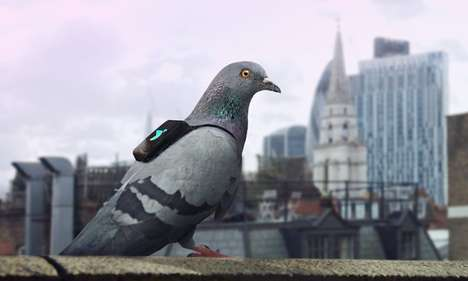Pigeon Pollution Campaigns - Pigeon Air Patrol Used Backpack-Wearing Birds to Monitor Air Pollution