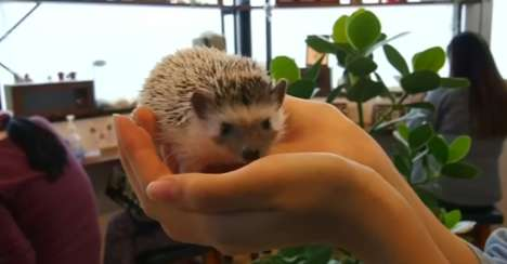Interactive Rodent Cafes - The Harry Cafe Experience in Tokyo Allows Guests to Play with Hedgehogs