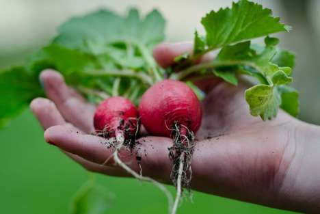Hotel Gardening Initiatives - 'AccorHotels' is Growing Its Own Produce in Order to Reduce Food Waste